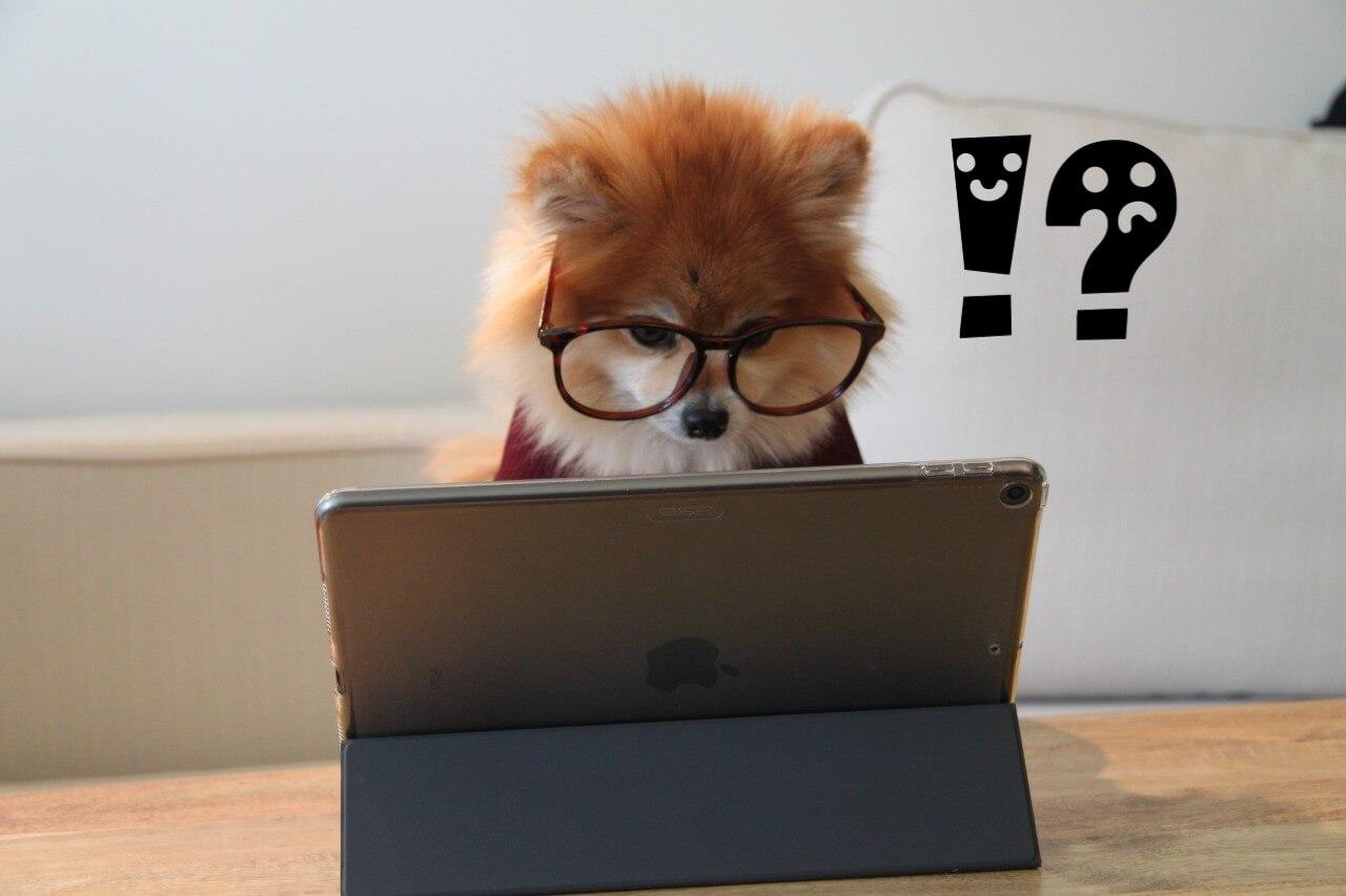 電動歯ブラシ発見する犬